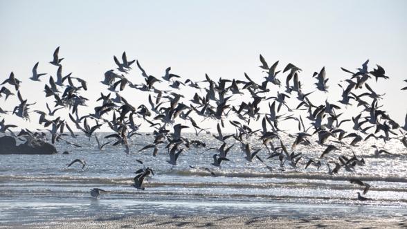 flock of birds flying over seashore