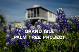 Grand Isle Palm Tree Project
