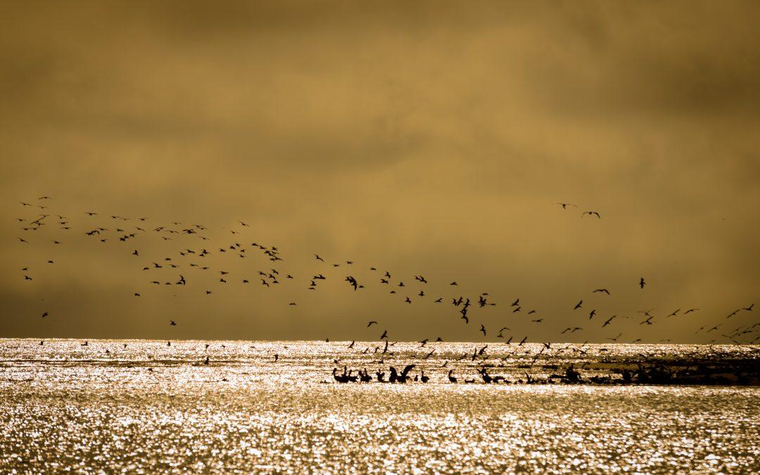 Birds on Grand Isle