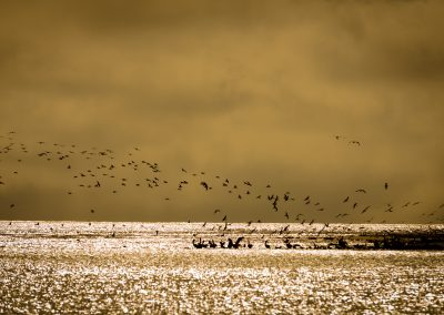 Birds on Grand Isle